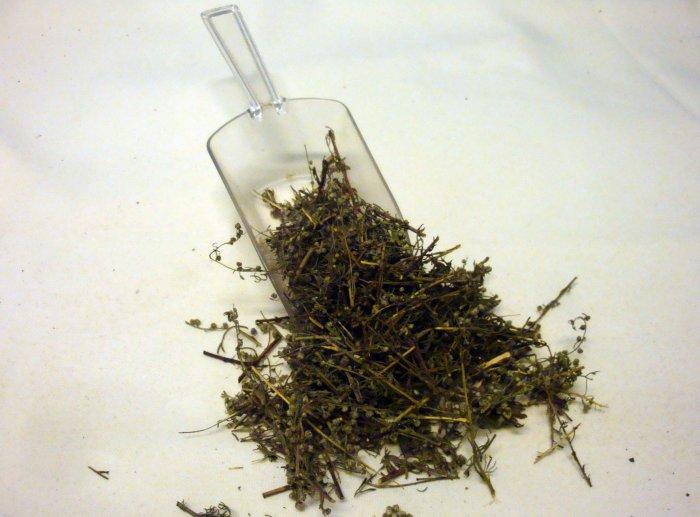 Abrótano Macho Artemisia Abrotanum L Planta 100 Gr Plantas Medicinales